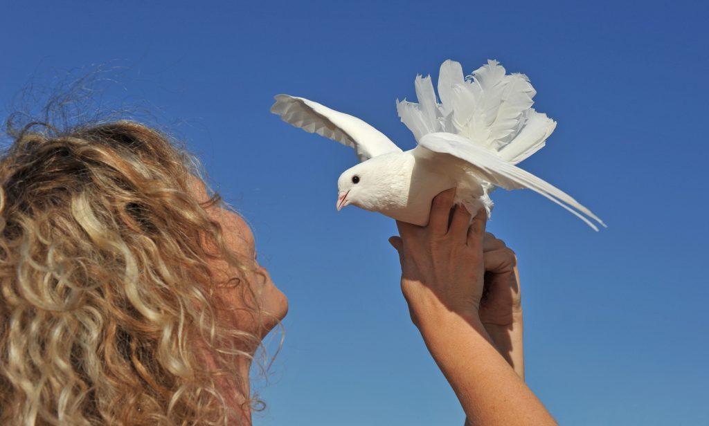 white dove release in pittsburgh
