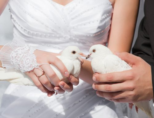 White Dove Release in Pittsburgh: 6 Reasons to Have One at Your Wedding